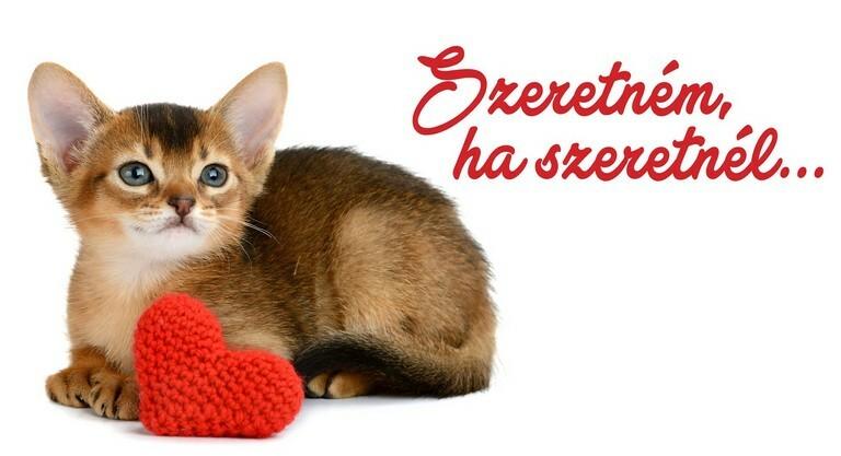 Újranyit a Rex Alapítvány nagysikerű macskakávézója